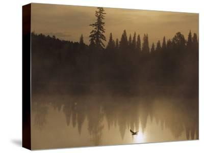 A Bird Flies Low over Fog-Shrouded Lake Superior-Medford Taylor-Stretched Canvas Print