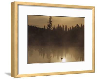A Bird Flies Low over Fog-Shrouded Lake Superior-Medford Taylor-Framed Photographic Print