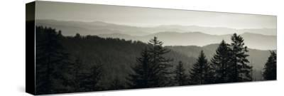 Panoramic View of Trees, Great Smoky Mountains National Park, North Carolina, USA--Stretched Canvas Print
