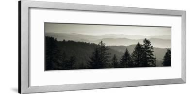 Panoramic View of Trees, Great Smoky Mountains National Park, North Carolina, USA--Framed Photographic Print