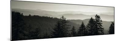 Panoramic View of Trees, Great Smoky Mountains National Park, North Carolina, USA--Mounted Photographic Print
