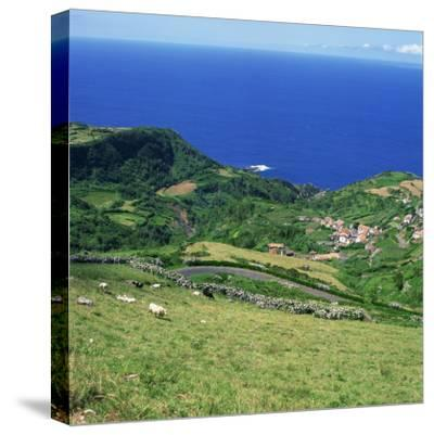 Cattle, Fields and Small Village on the Island of Flores in the Azores, Portugal, Atlantic, Europe-David Lomax-Stretched Canvas Print