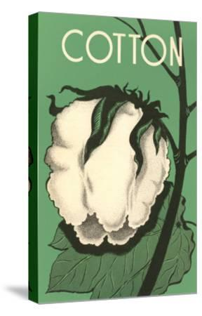 Cotton Boll--Stretched Canvas Print
