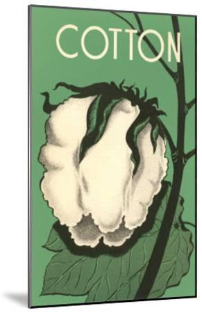 Cotton Boll--Mounted Art Print