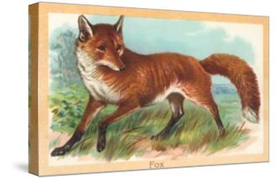 Fox in the Meadow--Stretched Canvas Print