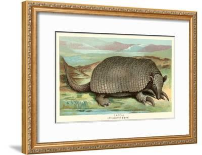 Tatou Armadillo--Framed Art Print
