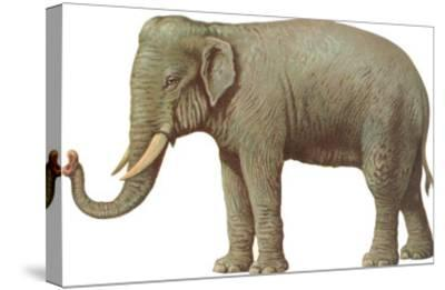 Indian Elephant--Stretched Canvas Print