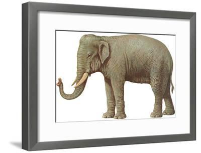 Indian Elephant--Framed Art Print