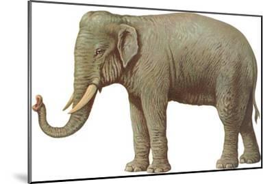 Indian Elephant--Mounted Art Print