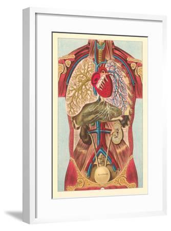 Interior View of Human Abdomen--Framed Art Print