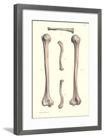 Long Bones of the Leg--Framed Art Print