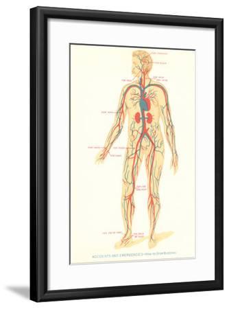 Schematic of Circulatory System--Framed Art Print