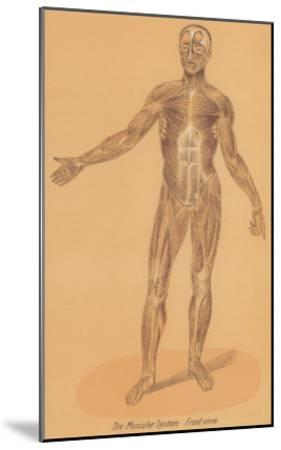 Anterior View of Human Musculature--Mounted Art Print
