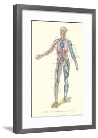 Circulatory System--Framed Art Print