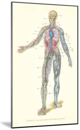 Circulatory System--Mounted Art Print