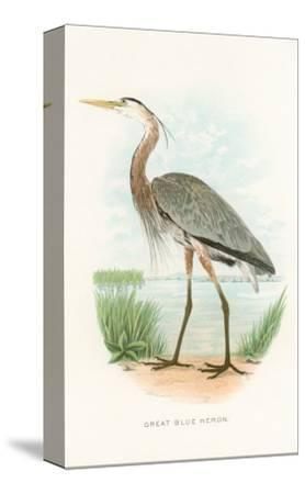 Great Blue Heron--Stretched Canvas Print