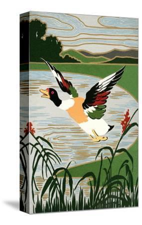 Mallard in Flight--Stretched Canvas Print