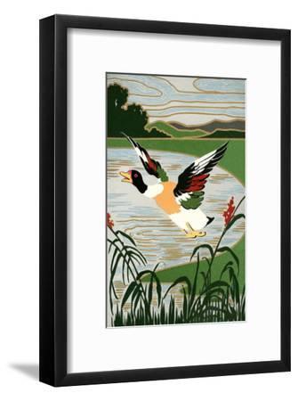 Mallard in Flight--Framed Art Print