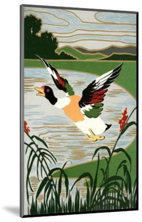 Mallard in Flight--Mounted Art Print