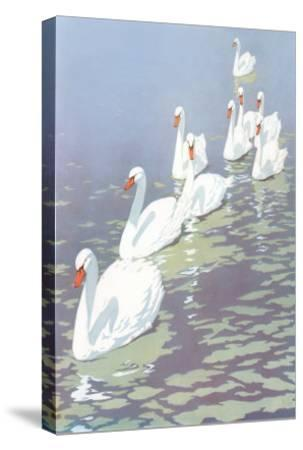 Swans in Line--Stretched Canvas Print