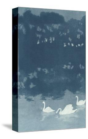 Swans in Dusk--Stretched Canvas Print