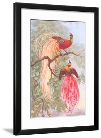 Chinese Golden Pheasants--Framed Art Print