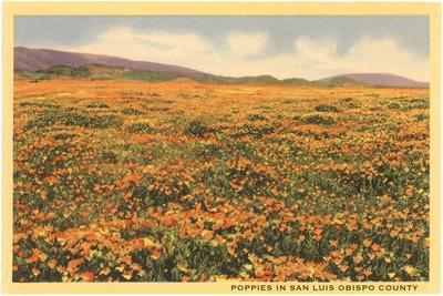 Poppies in San Luis Obispo--Stretched Canvas Print