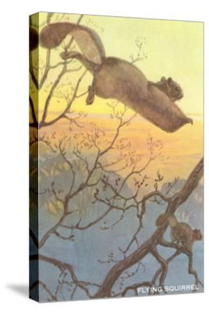 Flying Squirrel--Stretched Canvas Print