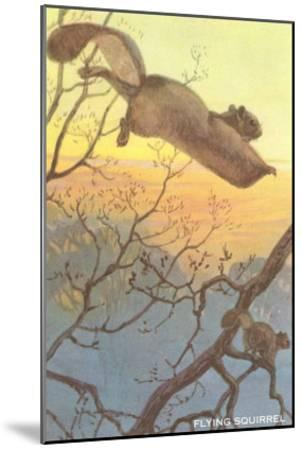 Flying Squirrel--Mounted Art Print