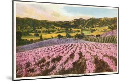 Orchards, Los Gatos, California--Mounted Art Print