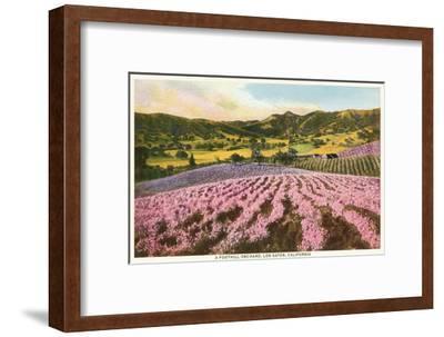 Orchards, Los Gatos, California--Framed Art Print