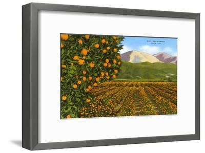 Orange Groves, Ojai--Framed Art Print