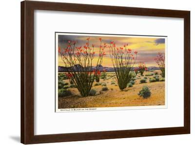 Ocotillo Blooming in Desert--Framed Art Print