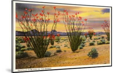 Ocotillo Blooming in Desert--Mounted Art Print