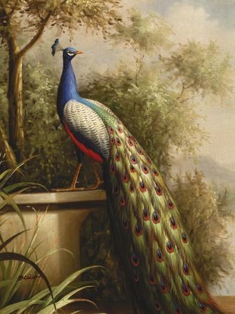 Regal Peacock--Framed Premium Giclee Print
