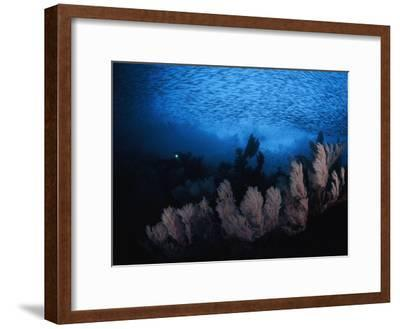 Sea fans and a school of cesio fish in passage off of Misool Island-David Doubilet-Framed Photographic Print