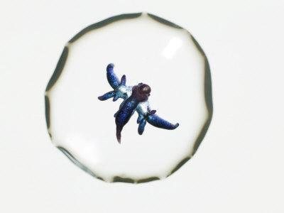 An unidentified marine micro fauna in a drop of water-David Liittschwager-Framed Photographic Print