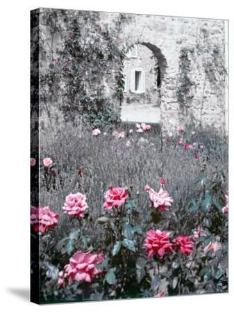Roses in Fore in Duke of Windsor's Garden at His Summer Home in South of France-Frank Scherschel-Stretched Canvas Print