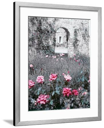 Roses in Fore in Duke of Windsor's Garden at His Summer Home in South of France-Frank Scherschel-Framed Photographic Print