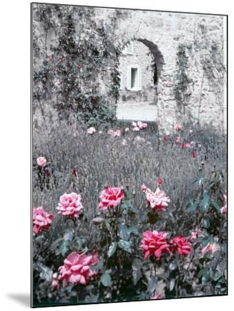 Roses in Fore in Duke of Windsor's Garden at His Summer Home in South of France-Frank Scherschel-Mounted Photographic Print