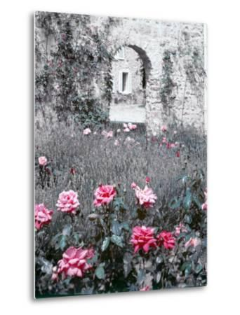 Roses in Fore in Duke of Windsor's Garden at His Summer Home in South of France-Frank Scherschel-Metal Print