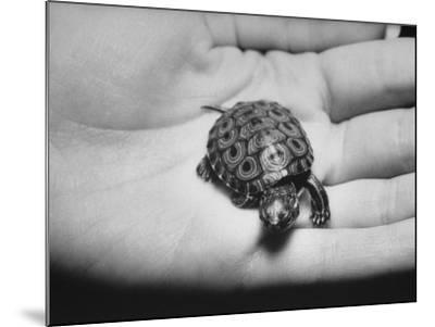 Pet Turtle-Ralph Morse-Mounted Photographic Print
