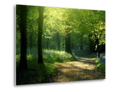 Track Leading Through Lanhydrock Beech Woodland with Bluebells in Spring, Cornwall, UK-Ross Hoddinott-Metal Print