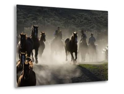 Cowboys Driving Horses at Sombrero Ranch, Craig, Colorado, USA-Carol Walker-Metal Print