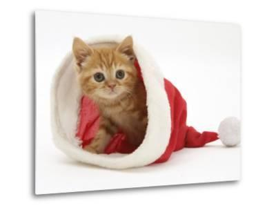 Red Tabby Kitten in a Father Christmas Hat-Jane Burton-Metal Print