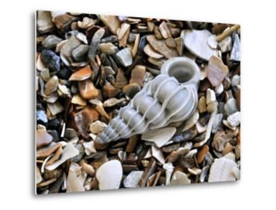 Common Wentletrap Shell on Beach, Belgium-Philippe Clement-Metal Print