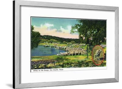 San Angelo, Texas - View of Sheep on the Range, c.1948-Lantern Press-Framed Art Print