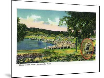 San Angelo, Texas - View of Sheep on the Range, c.1948-Lantern Press-Mounted Art Print