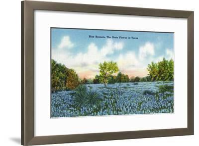 Texas - View of a Field of Blue Bonnets, c.1945-Lantern Press-Framed Art Print