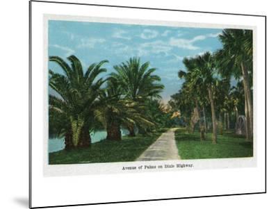 Daytona, Florida - Dixie Highway View of an Avenue of Palms, c.1914-Lantern Press-Mounted Art Print